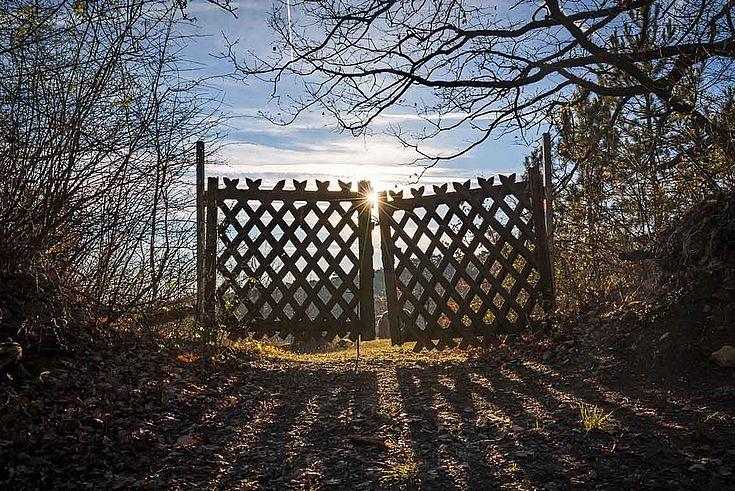Ein einsames Gartentor zwischen Büschen und Bäumen, die dringend beschnitten gehören.