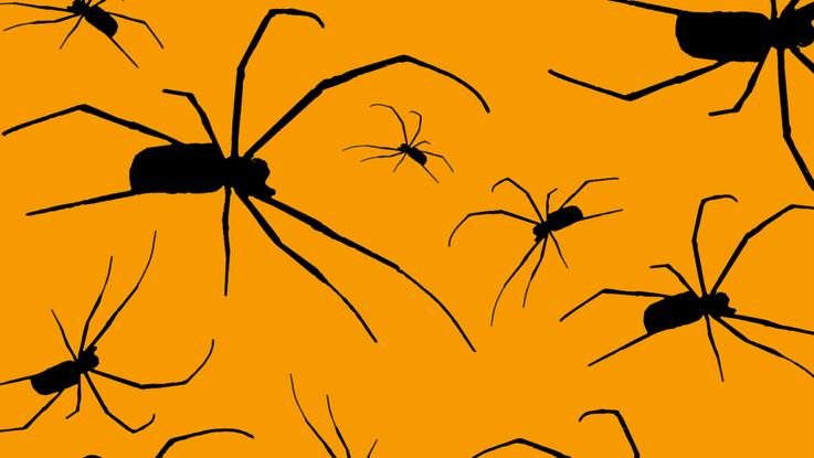 Umrisse von vielen krabbelnden Spinnen mit langen Beinen