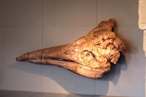 Foto des beeindruckenden Fischsauriers