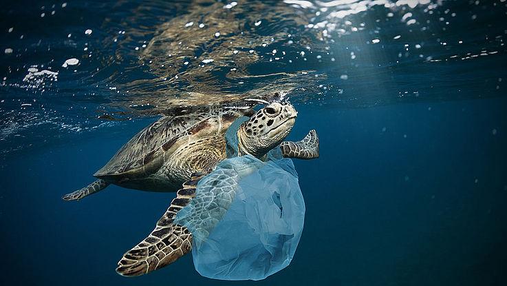Schildkröte mit einer Plastiktüte um den Hals schwimmt im Meer