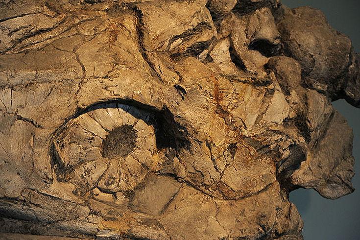 Detailfoto des Fischsauriers