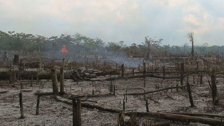 Brennende Bäume, teilweise verkohlt