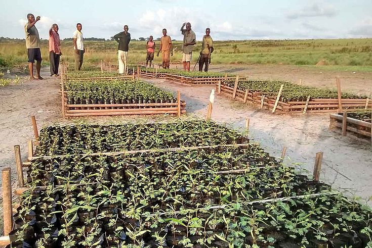In der DR Kongo führen wie in Zusammenarbeit mit der EU ein Projekt im Bereich der Agroforstwirtschaft durch, um zur Nahrungs- und Energiesicherheit der Bevölkerung beizutragen und gleichzeitig die Abholzung von natürlichen Wäldern zu reduzieren.